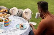 برنامه جدید ایربیانبی؛ تجربه گردشگری با حیوانات | فهرست عجیب تورها ؛ از ماجراجویی در چرنوبیل با سگها تا سافاری طوطیهای وحشی | لیست ممنوعههای سفر
