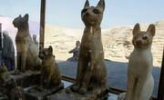 فیلم | رونمایی از حیوانات مومیامی شده در مصر