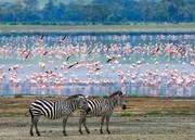 ۵ تا از بهترین مقاصدی که میتوان در آفریقا به آنها سفر کرد