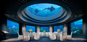 معرفی چند هتل زیر آب | اقامت در کنار ماهیها