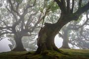 جنگلهای باستانی و مسحور کننده مادیرا با درختان ۵۰۰ ساله