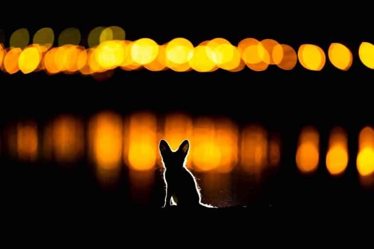 عکسی زیبا از خرگوش اروپایی برنده مسابقه عکاسی از طبیعت سال ۲۰۲۰ شد
