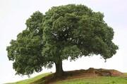 ماجرای تلخ تک درخت تنهای روستای تفریحی لولو اطراف شهر ایذه