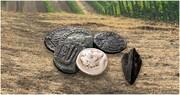 کشف سکه های ۲۰۰۰ ساله رومی در زمین کشاورزی | تکرار داستان سریال زیرخاکی این بار در لهستان
