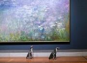 بازدید پنگوئن های باغ وحش کانزاس از یک موزه هنری | نظر پنگوئن ها درباره نقاشی های باروک و مونه چیست؟