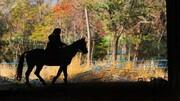 فیلمی باورنکردنی از جشنواره اسب رینه آمل در اوج کرونا | چطور انتظار داریم کرونا کنترل شود؟