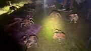 محاصره گردشگران محلی توسط خرچنگ های غول پیکر!
